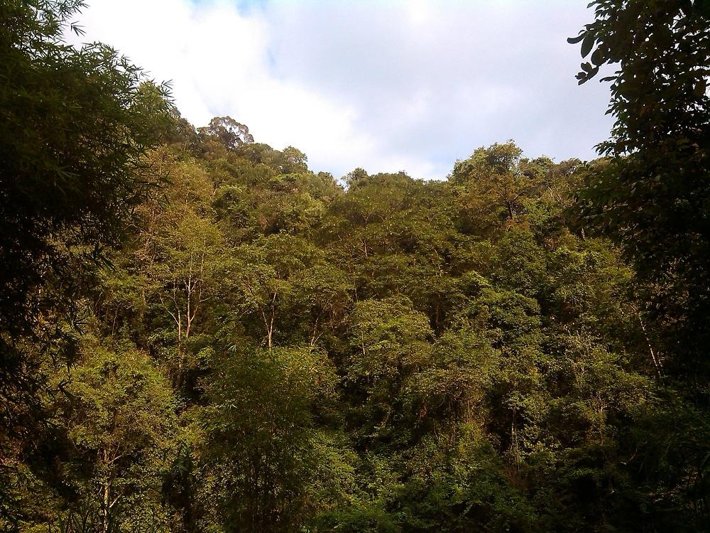 【故乡的原风景之阳岭国家森林公园】-【随手拍】论坛