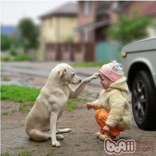 小孩和动物温暖