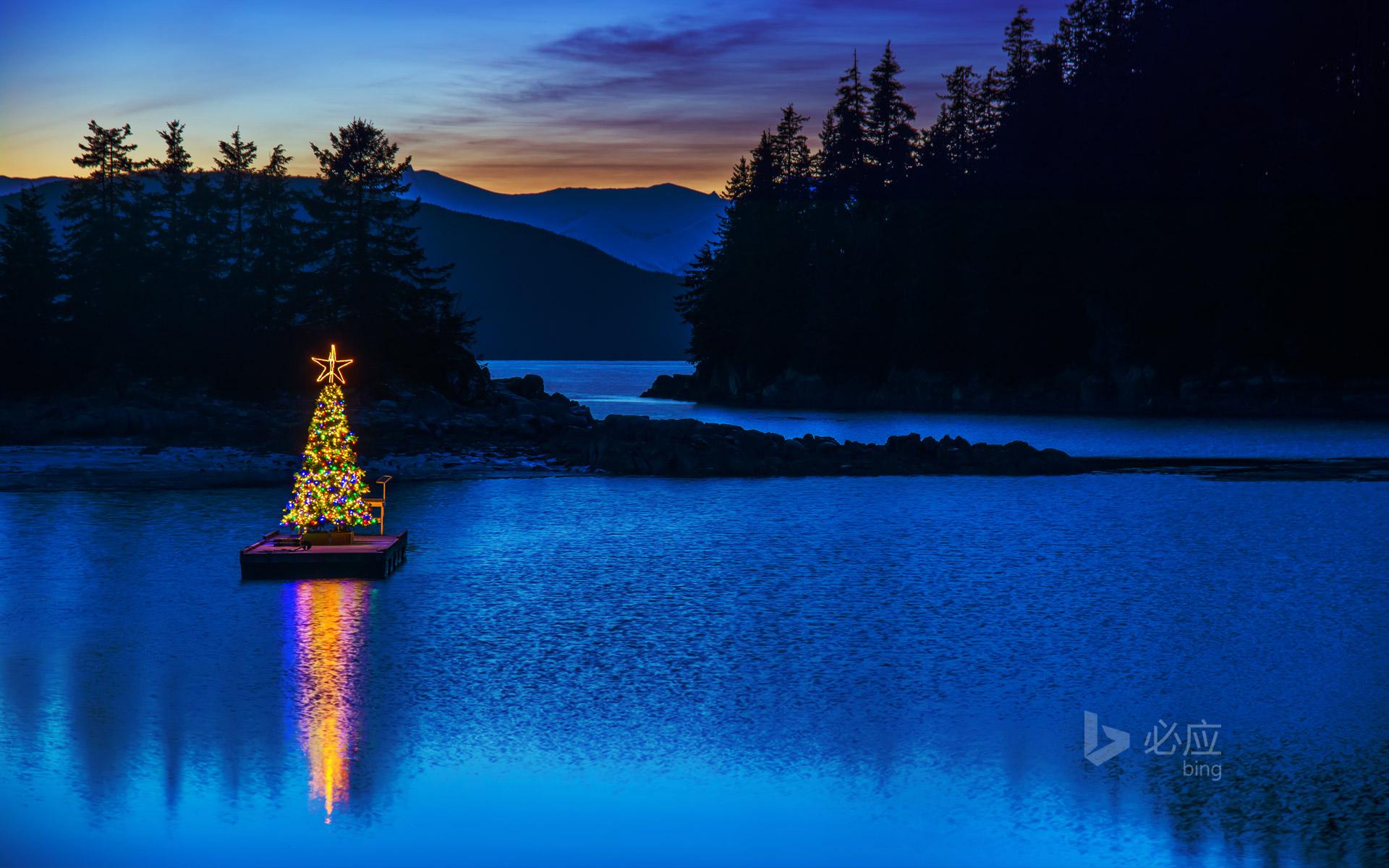 阿拉斯加的圣诞树