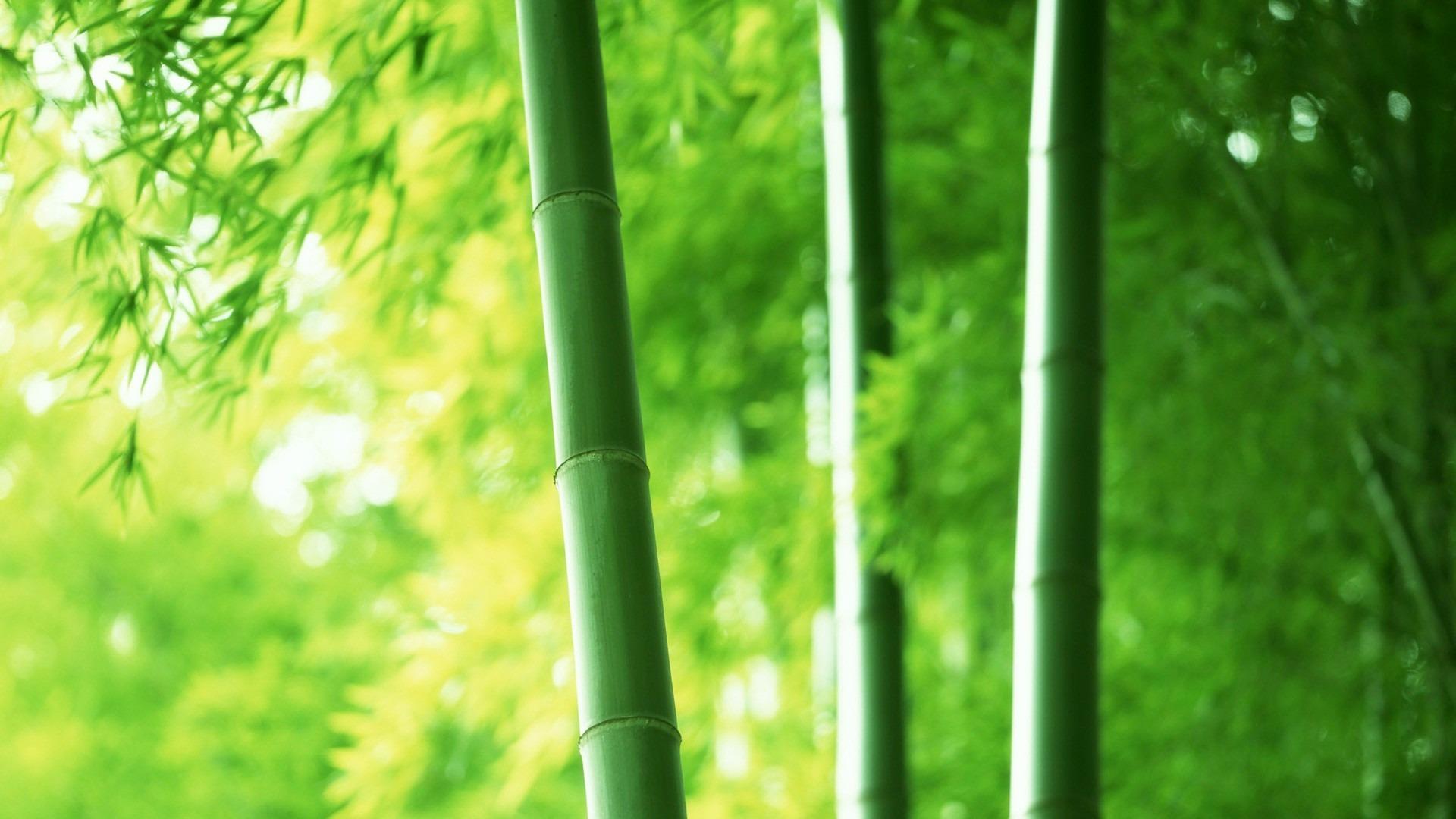 【一组高清绿色植物保护视力墙纸桌面壁纸】-【软件及