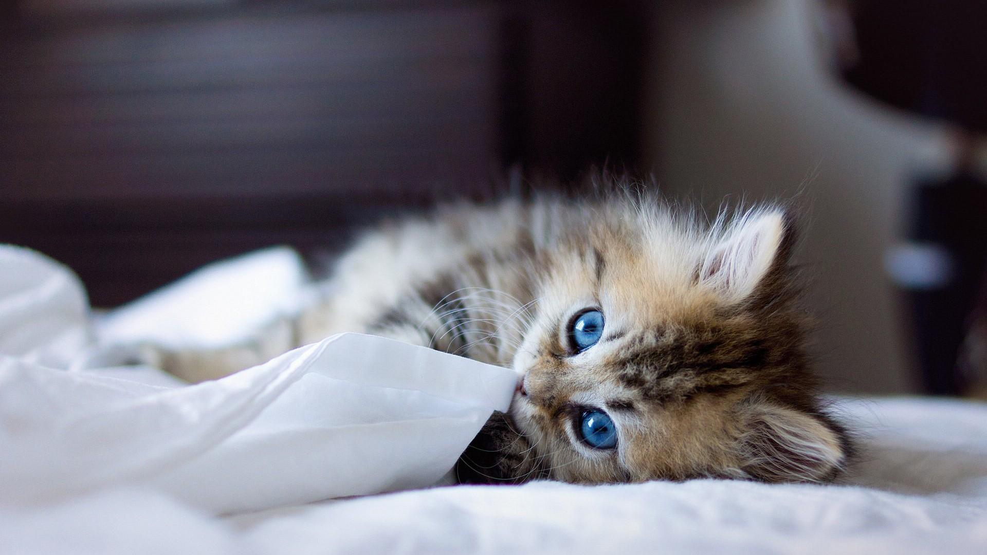 【可爱的小猫高清壁纸】-【乐聊】论坛-手机乐粉家