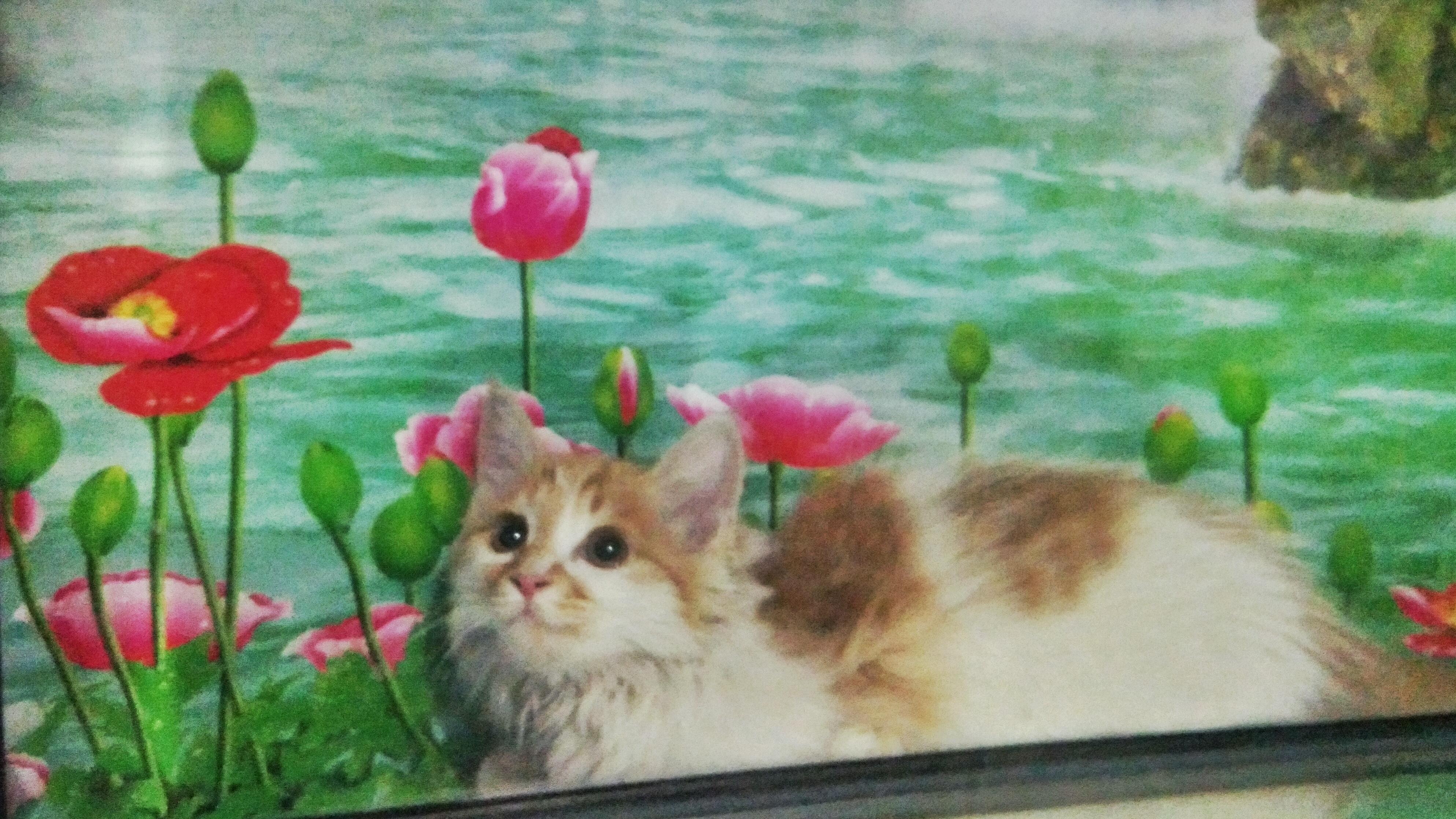 随手画的可爱动物