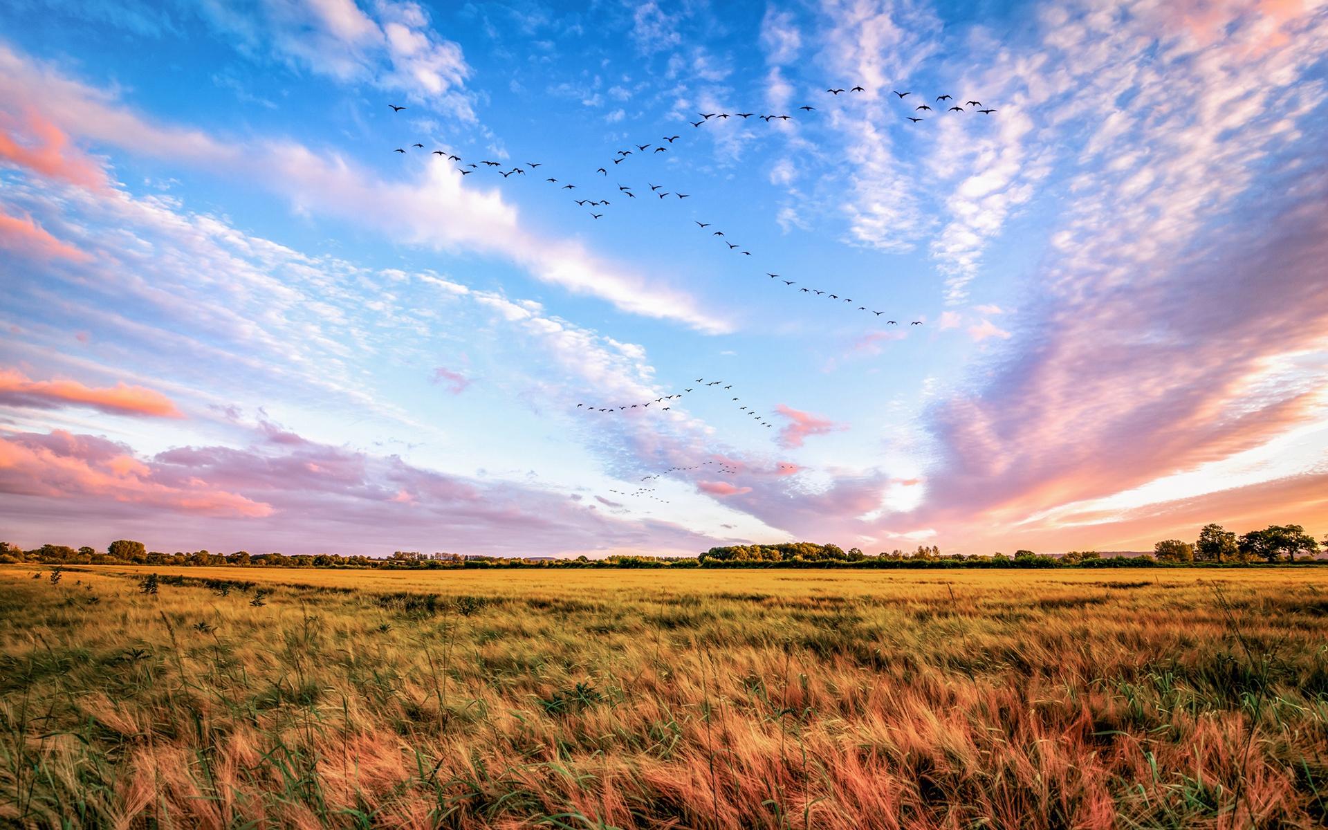 【美丽的草原风景】-【联想杂谈】论坛-lenovopc社区