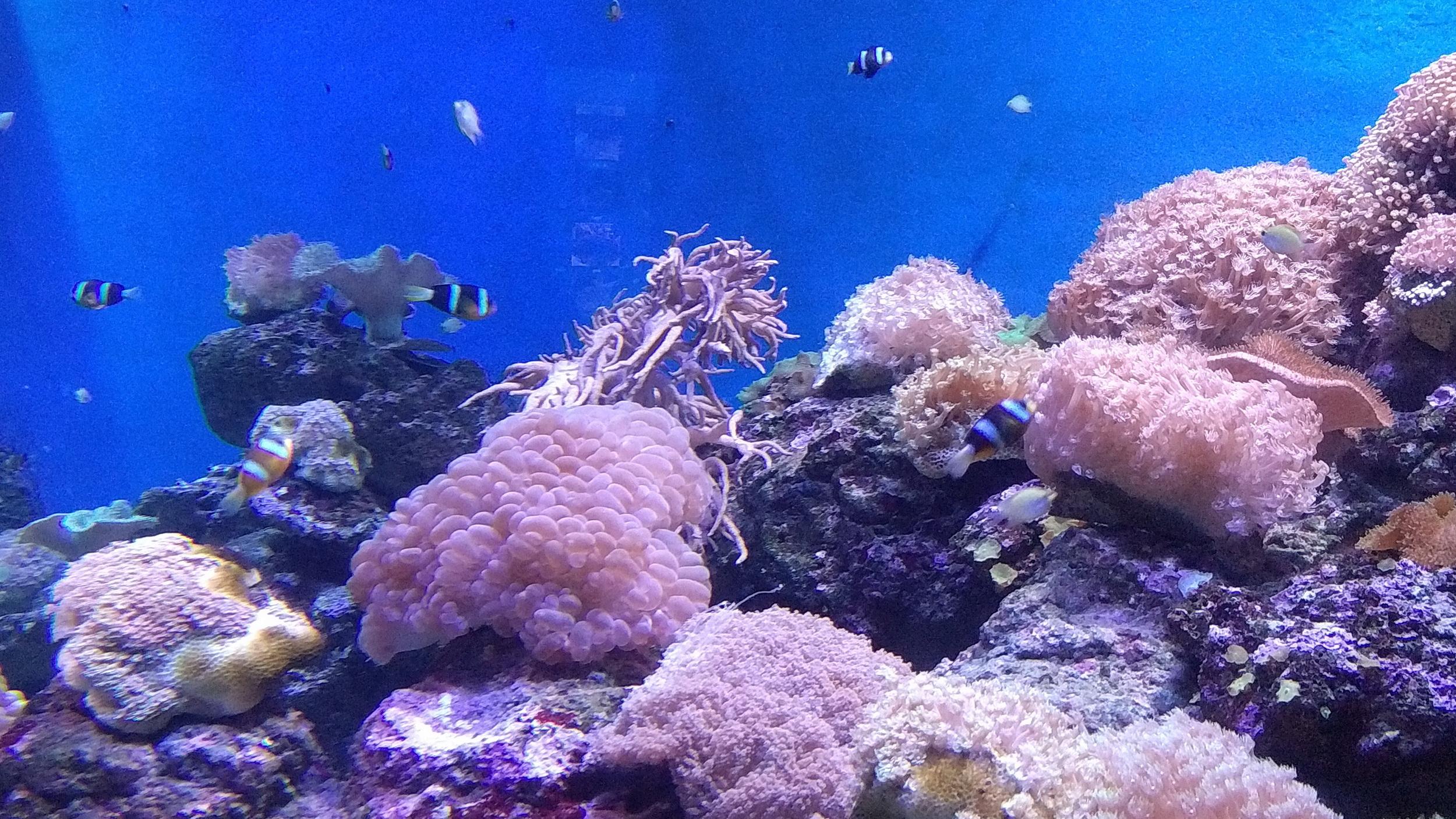 壁纸 海底 海底世界 海洋馆 水族馆 桌面 2500_1406
