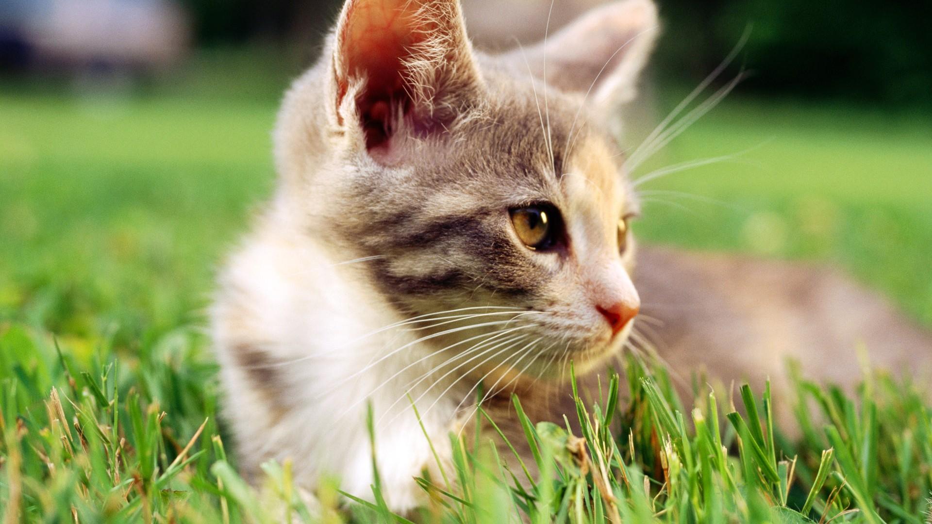 壁纸 动物 猫 猫咪 小猫 桌面 1920_1080