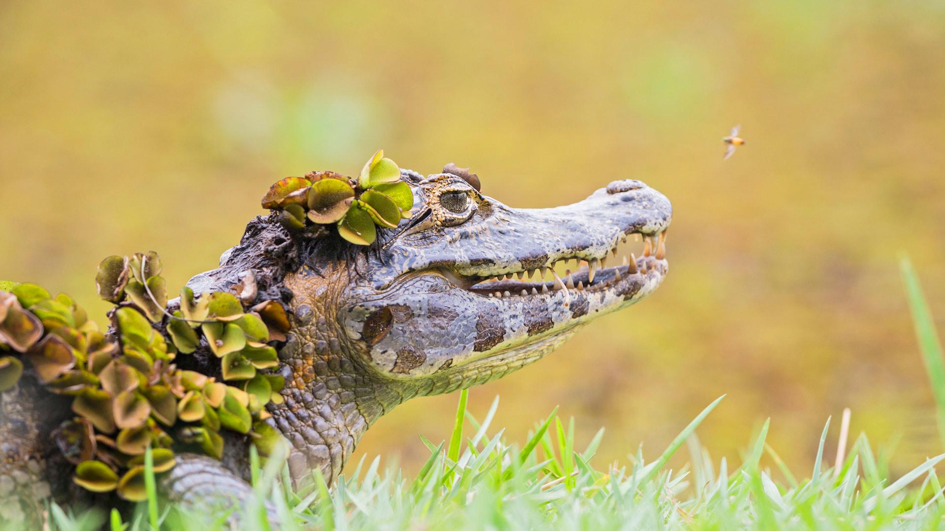 超级萌的可爱动物背景图片哟,萌萌哒可爱动物看了很想捏一把呀,如此