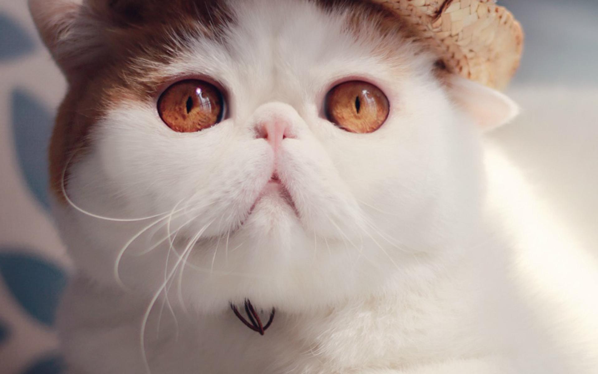 【超萌肥肥可爱猫咪】-【联想杂谈】论坛-lenovopc