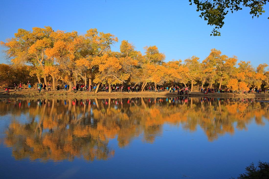 壁纸 风景 摄影 树 杨树 桌面 1100_733