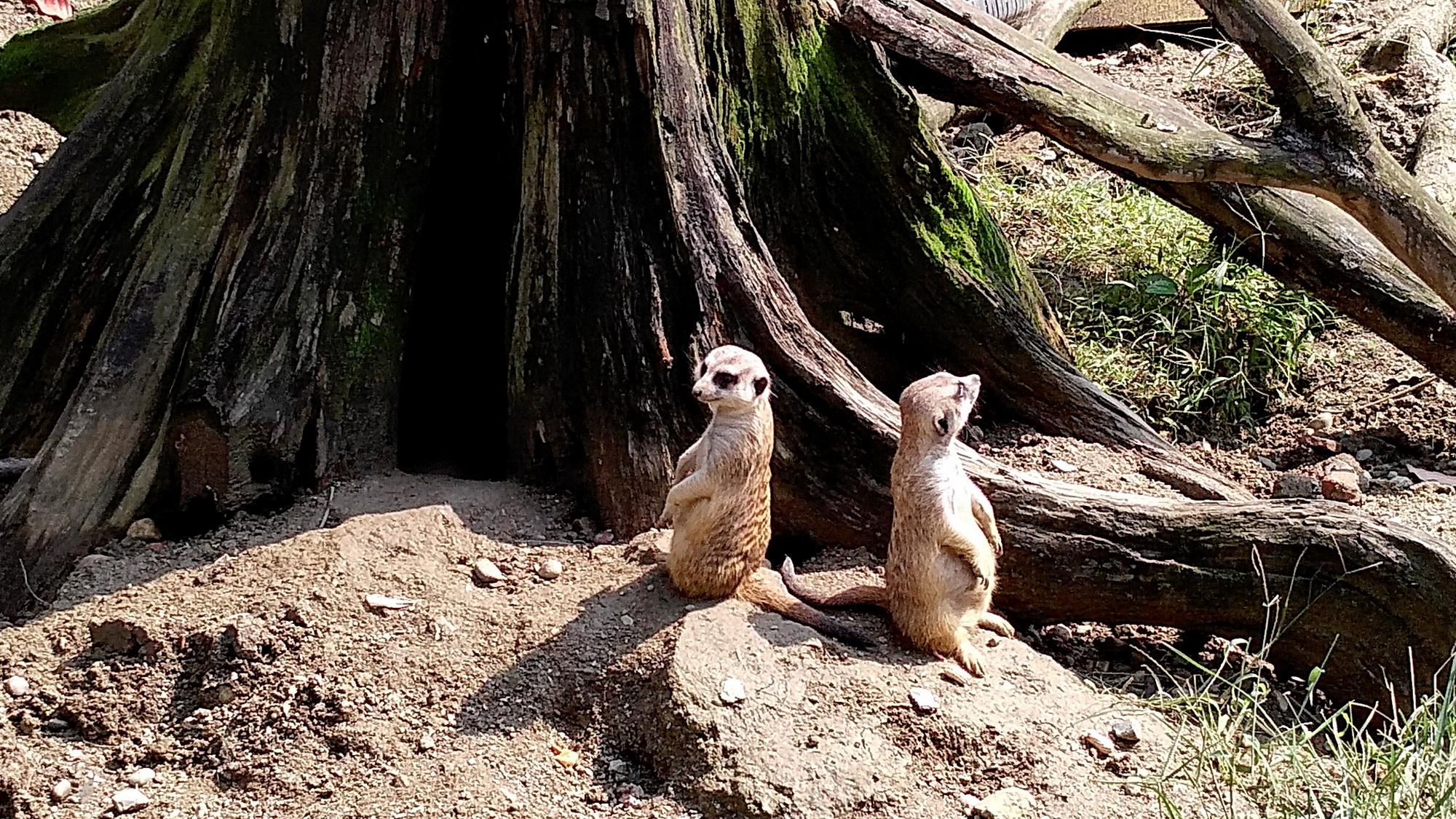 很喜欢这种小动物,在电视上经常看他们的介绍.