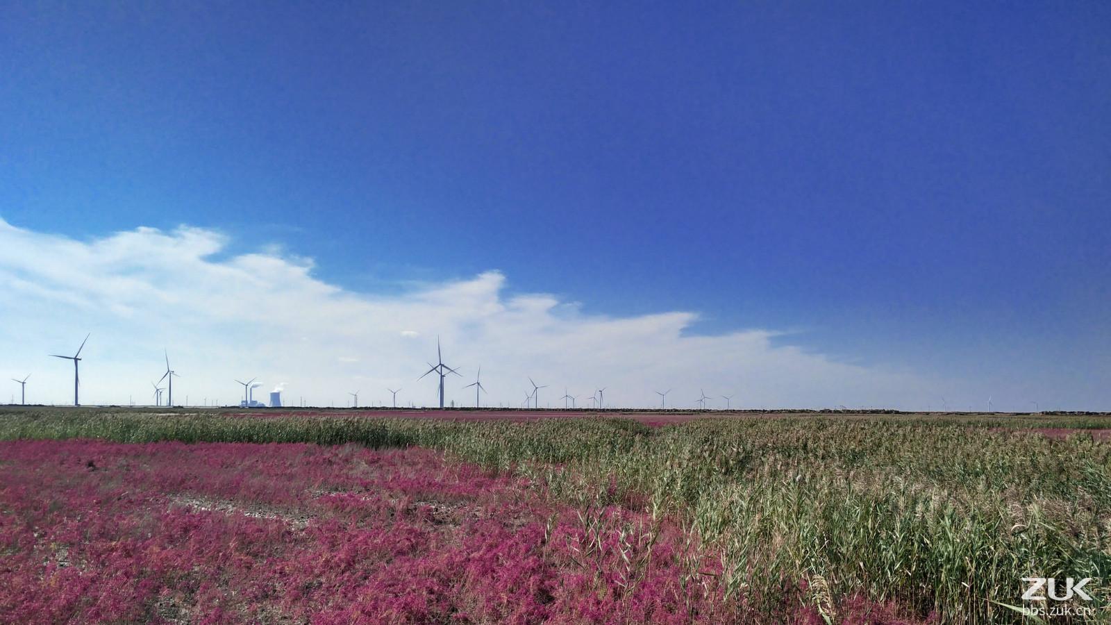 壁纸 草原 成片种植 风景 植物 种植基地 桌面 1600_900