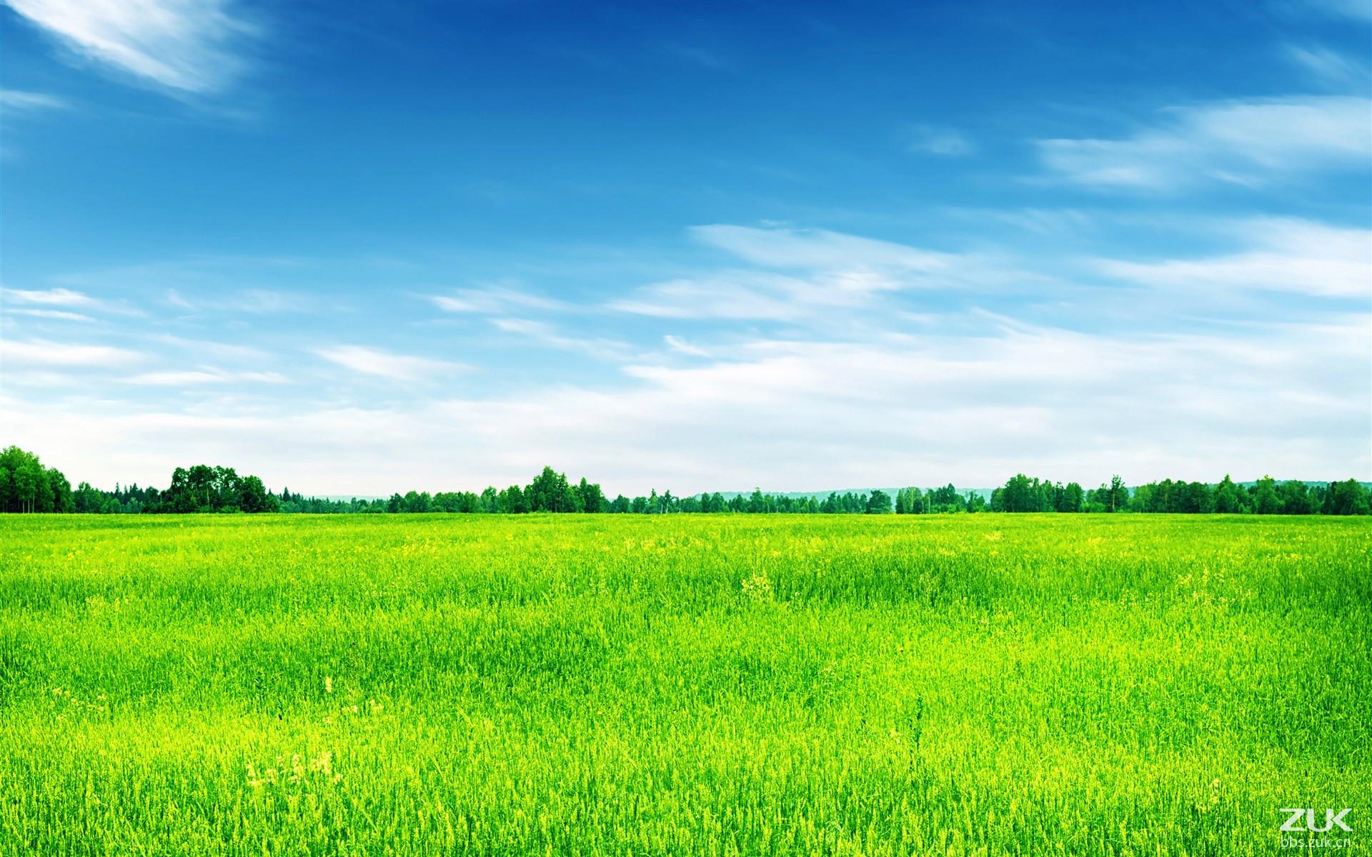 壁纸 草原 成片种植 风景 植物 种植基地 桌面 1920_1200