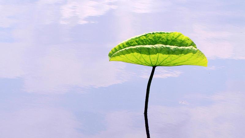 【绿色叶子】-【社区活动】论坛-手机乐粉家-联想社区