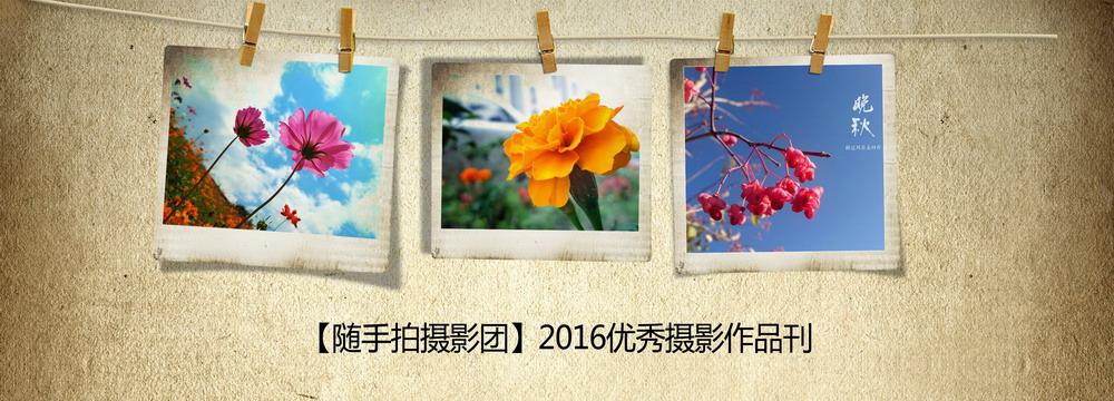 画册1000X360.jpg