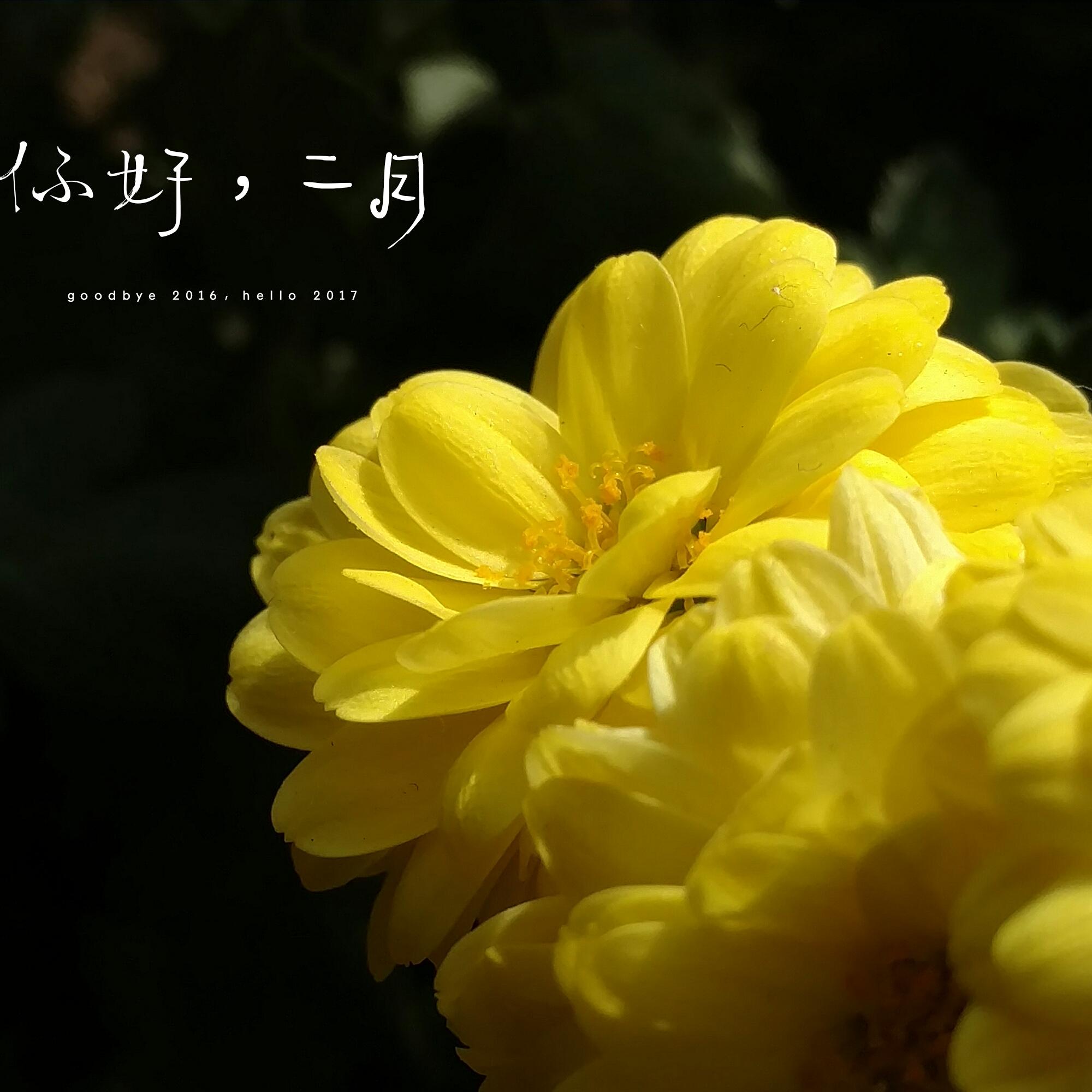 IMG_20170206_194853.jpg