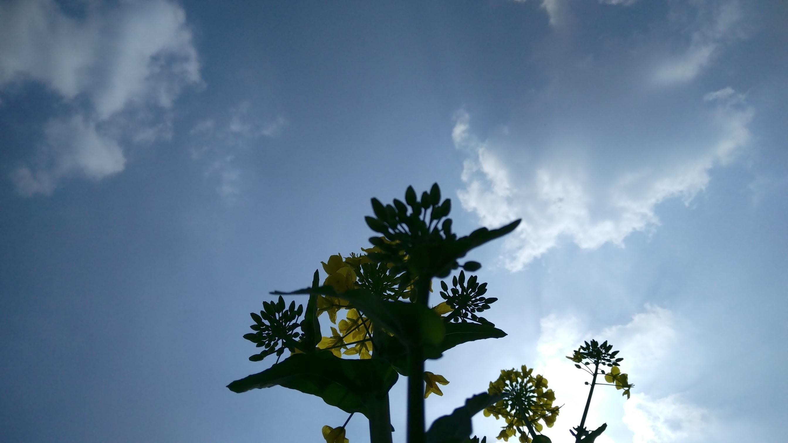 背景 壁纸 风景 天空 桌面 2688_1512