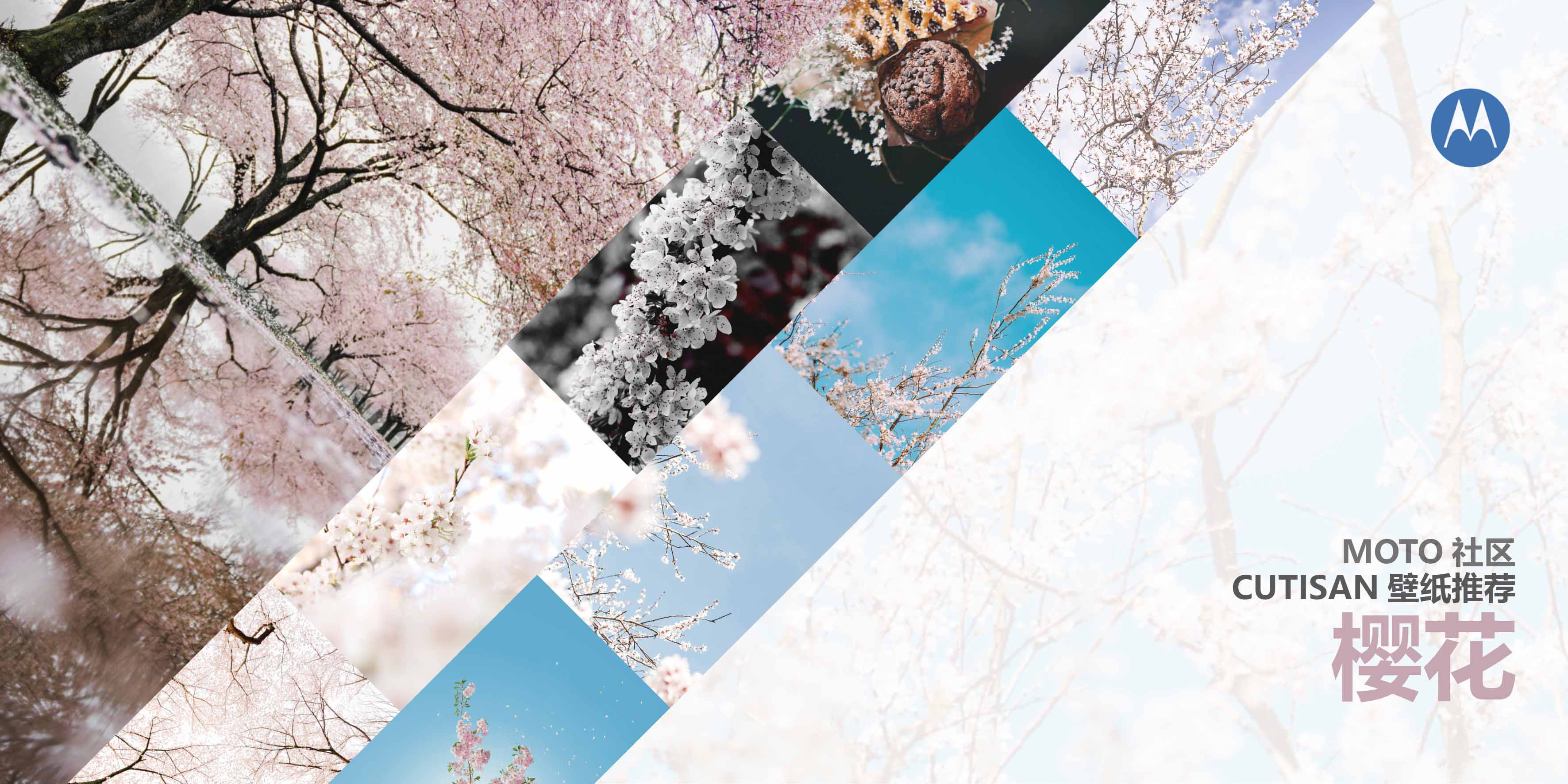 樱花.jpg