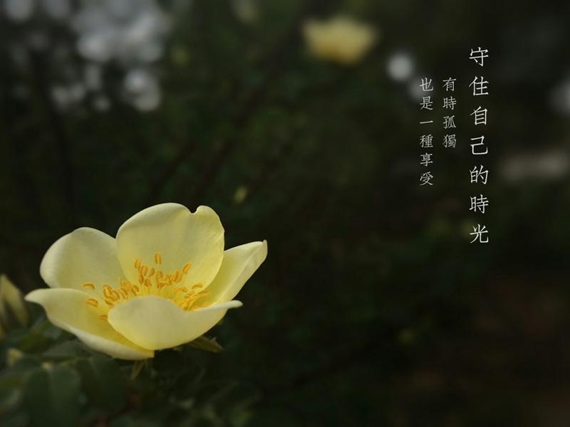 树叶.jpg