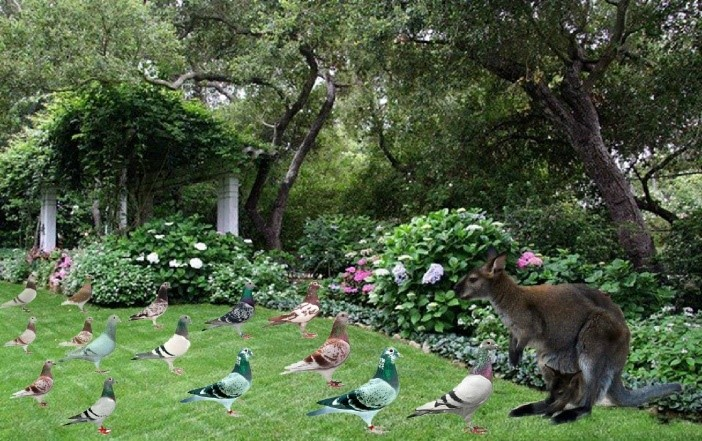 搞机大本营#小创意森林动物聚会