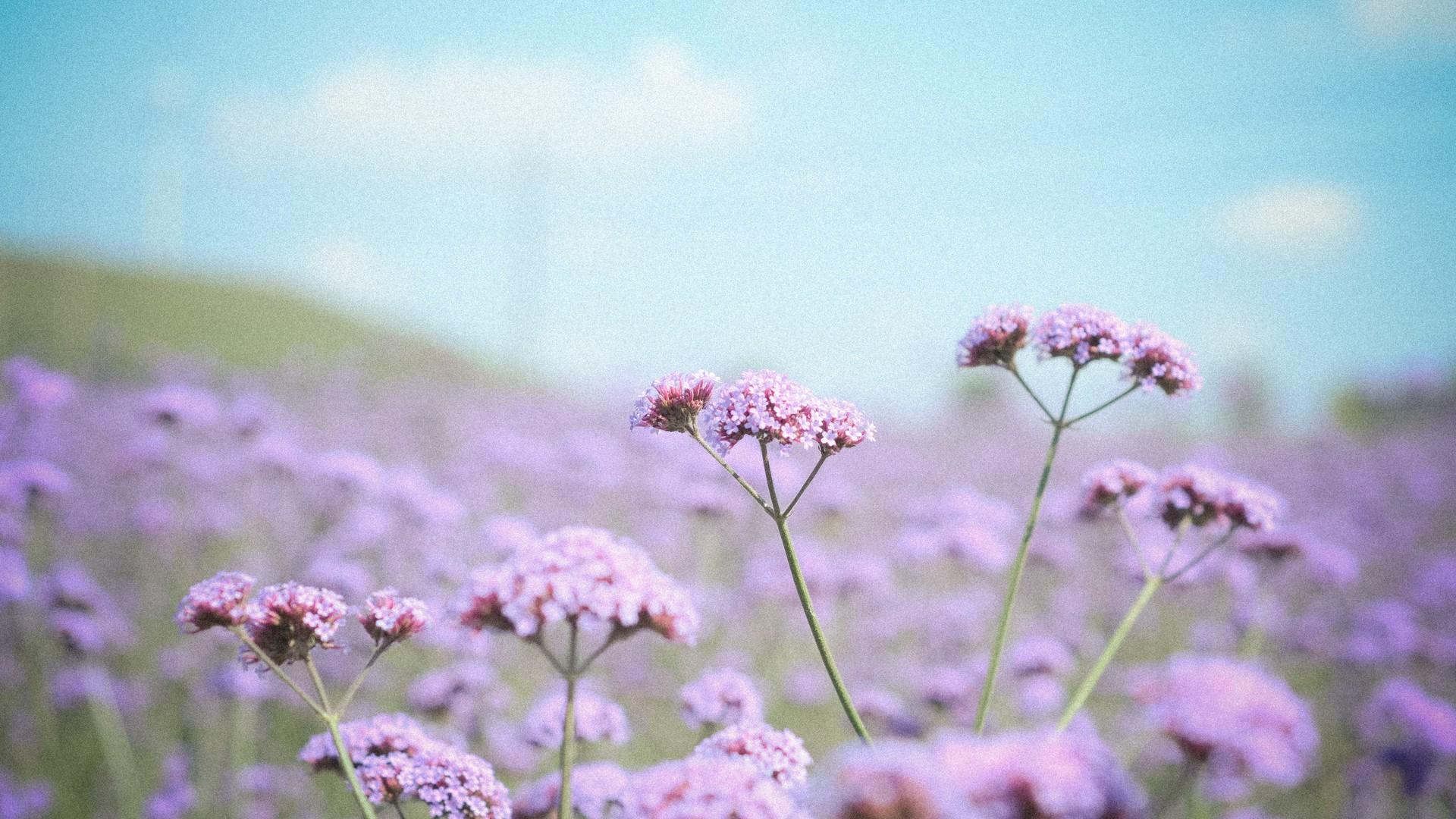【【共享壁纸】美女,动物与风景(小新 air 12