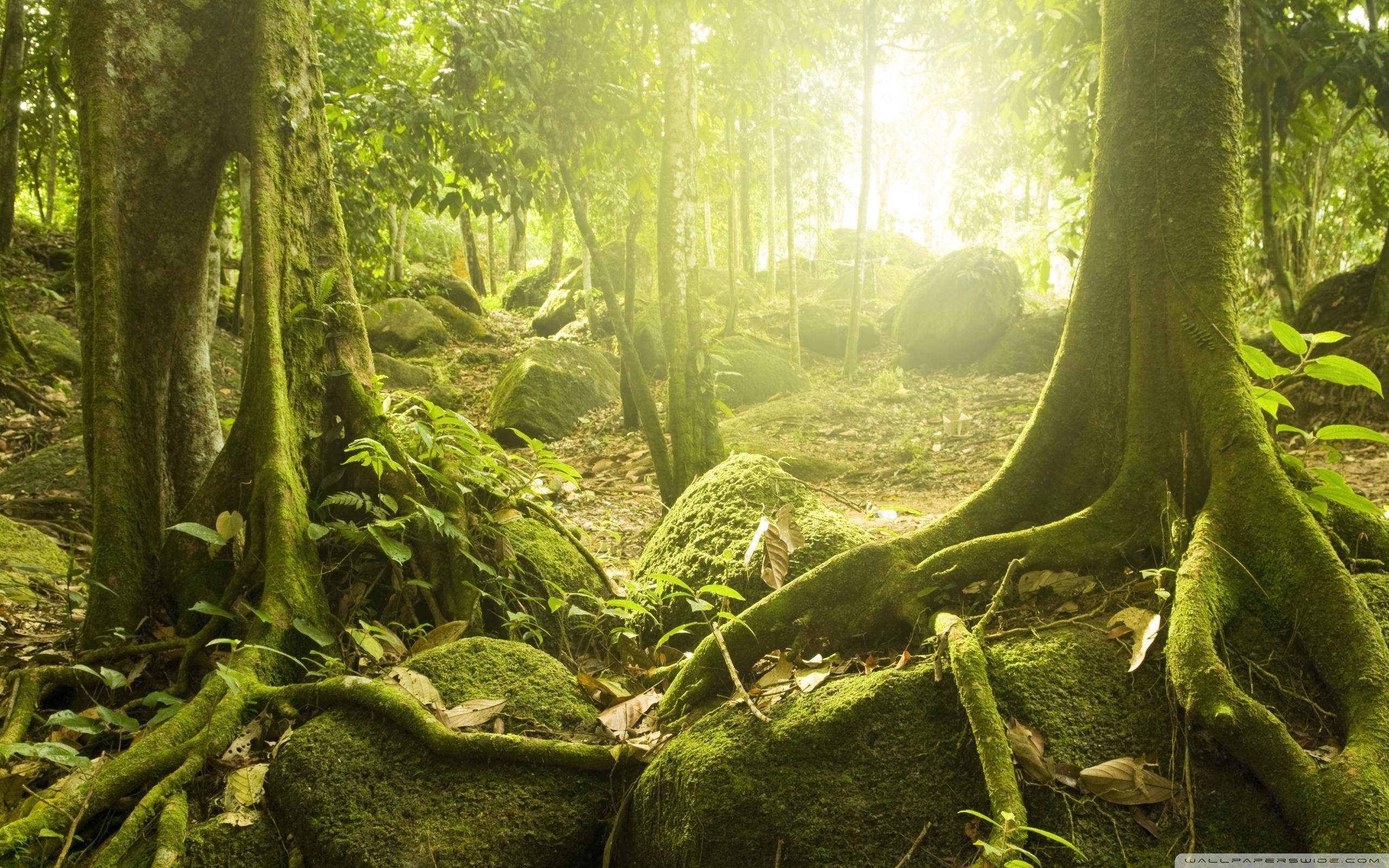 壁纸 风景 森林 桌面 2560_1600