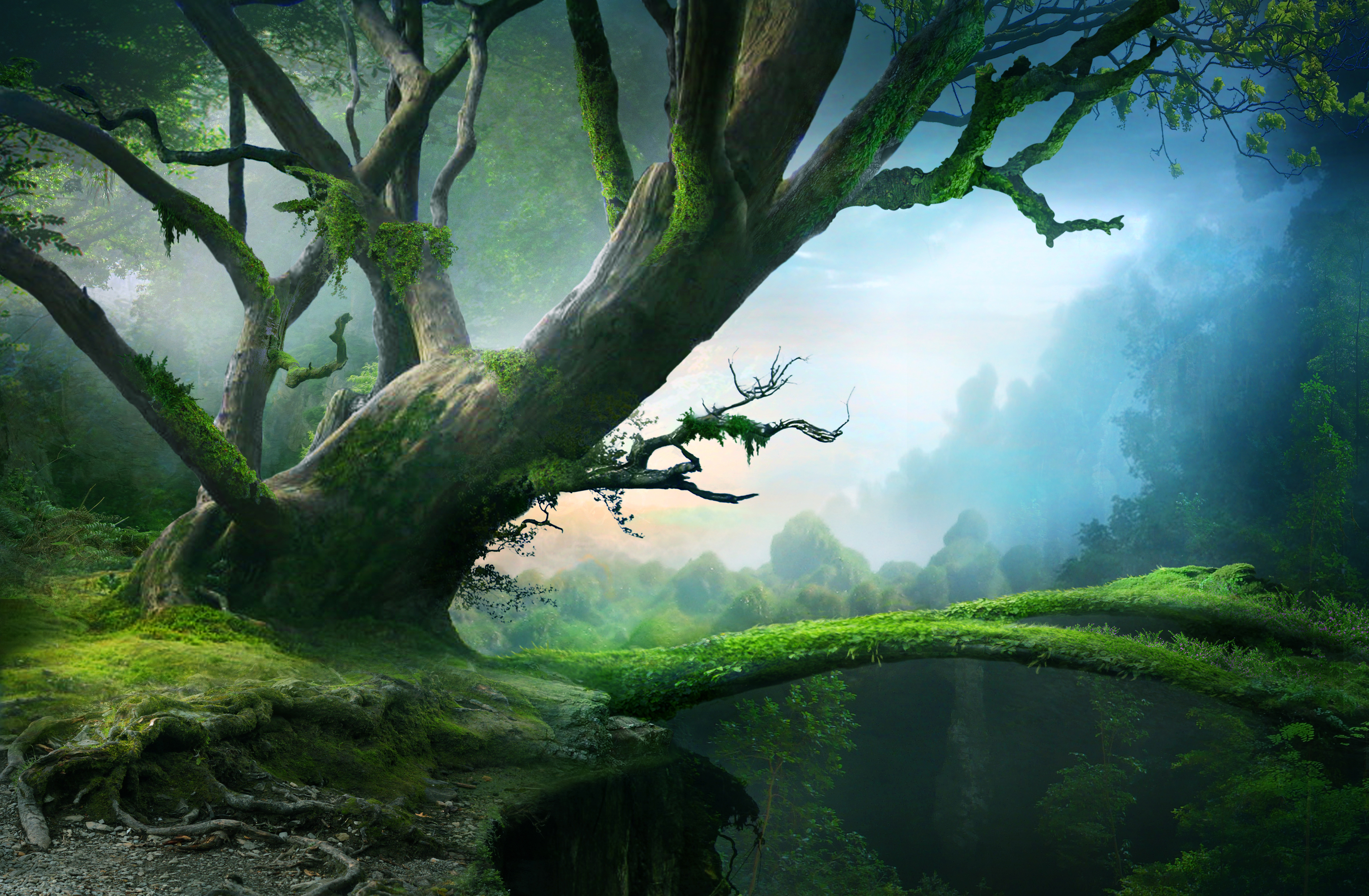 美丽的森林树桥风景壁纸_彼岸图网.jpg